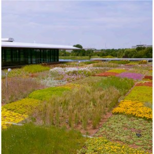 Green Roof plants